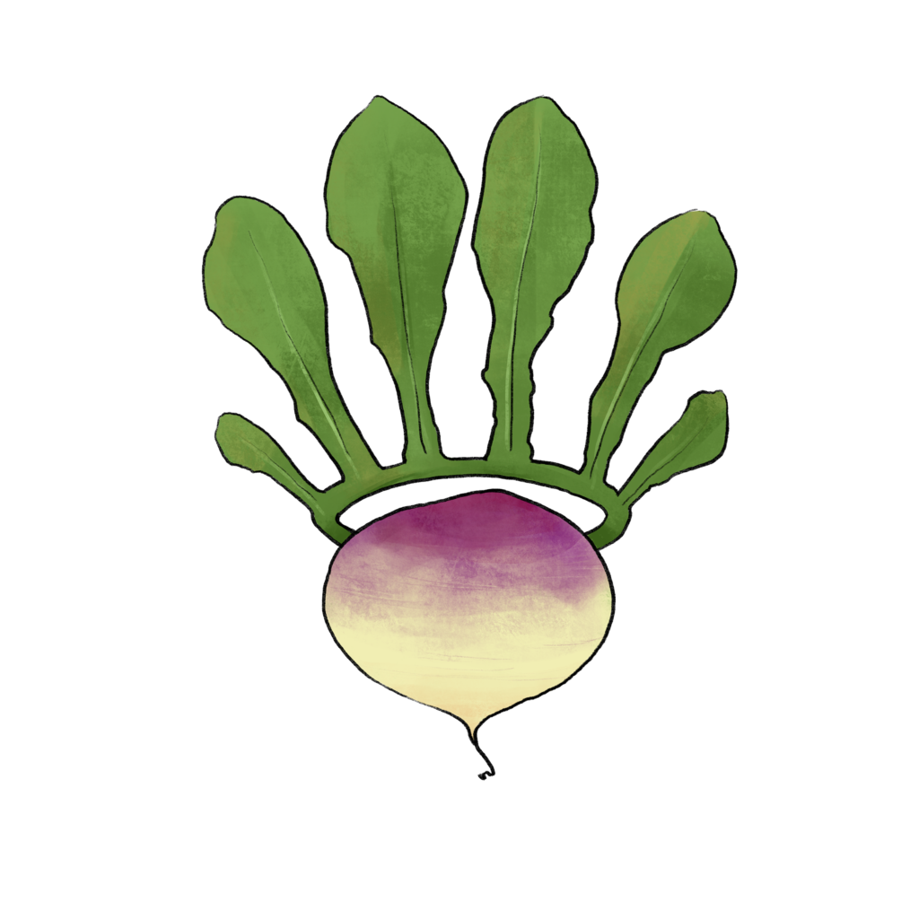 illustration of a turnip with a leaf crown