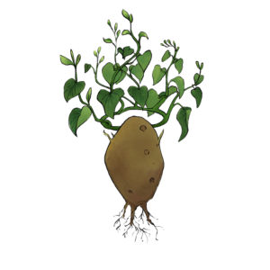 illustration of a potato with a leaf crown